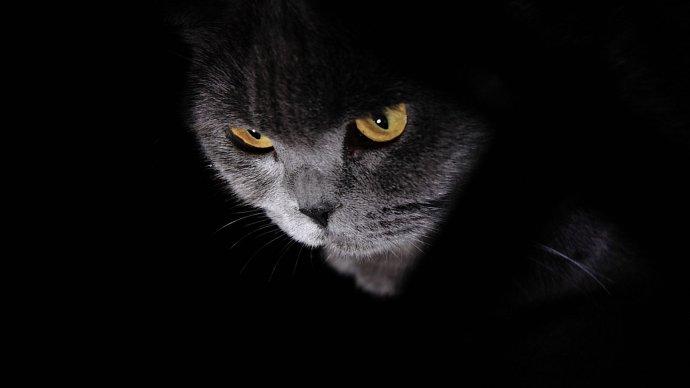 用手机拍摄猫咪需要具备哪些技巧?