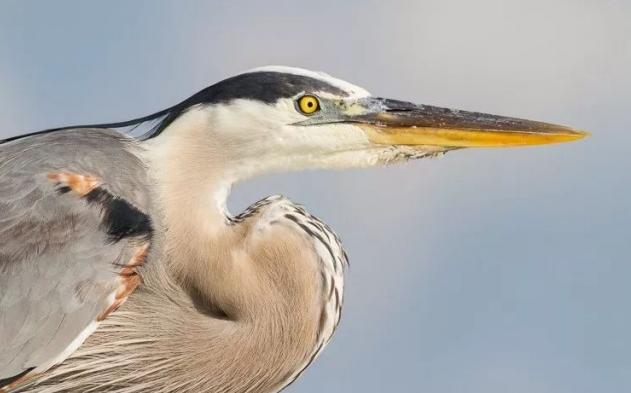 如何拍摄鸟类的特写照片?