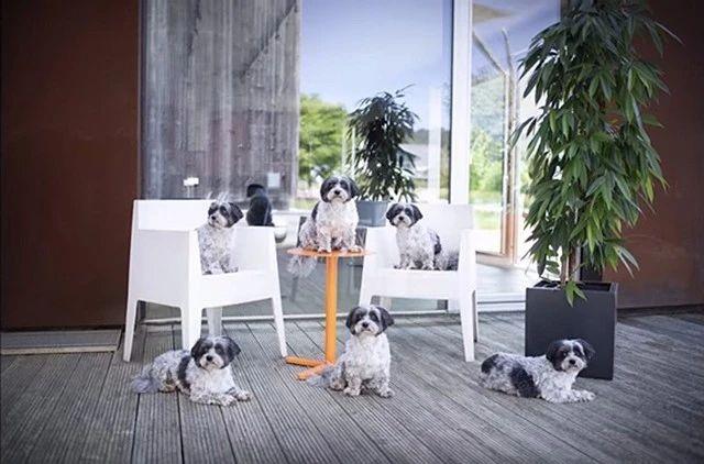 7个宠物拍摄技巧,让你拍好家中萌宠