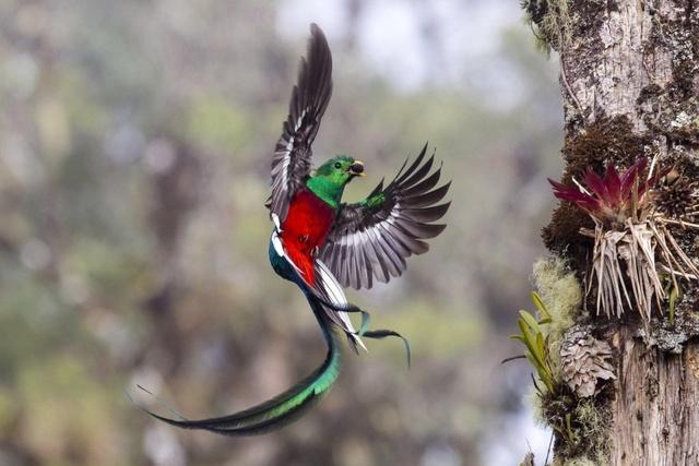 5个要点助你快速入门野生动物摄影